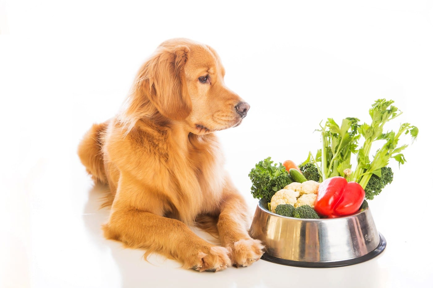 Salmonella and raw pet food